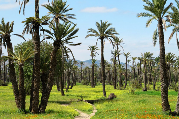 Visite des jardins du Marrakech : Majorelle, Menara, Agdal...